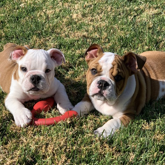 Why a Puppy Culture is Good for People